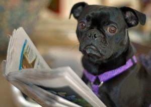 Dog Reads Newspaper by Steve Eng via Flickr